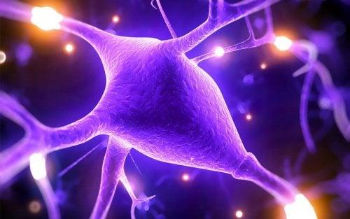 L'hypermagnésémie et les connexions neuronales