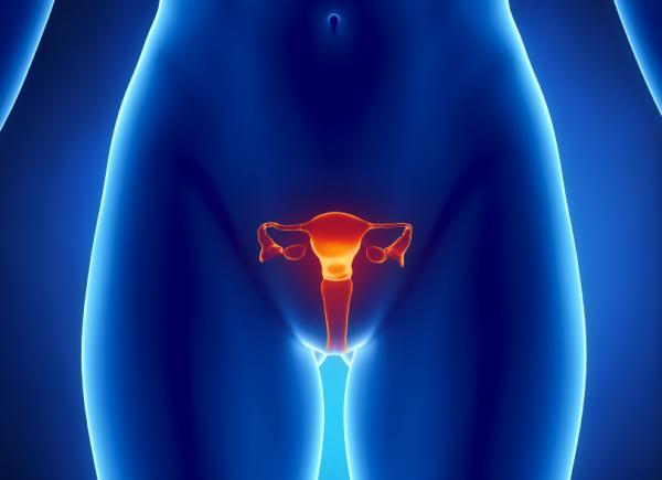 Une illustration des ovaires