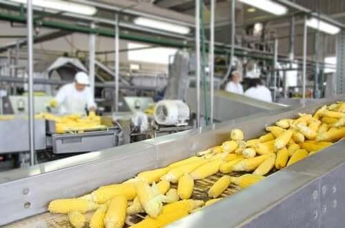 Processus technologiques et valeur nutritive des aliments