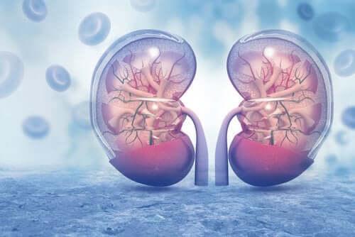 La vasopressine : fonction et effets sur l'organisme
