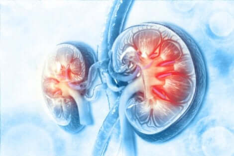 Les diurétiques et leur action sur les reins