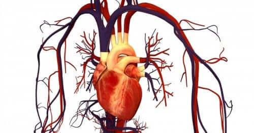 L'atorvastatine et les maladies cardiovasculaires
