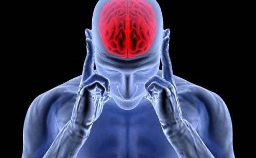 L'adrénaline et la norépinéphrine dans le cerveau humain
