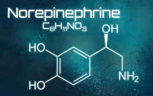 Qu'est-ce que la norépinéphrine et à quoi sert-elle ?
