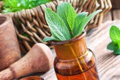 Les 15 meilleures herbes médicinales et leurs utilisations