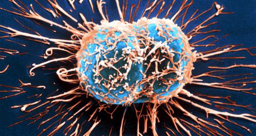 L'action du système immunitaire contre le cancer