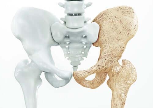L'anatomie du plancher pelvien masculin