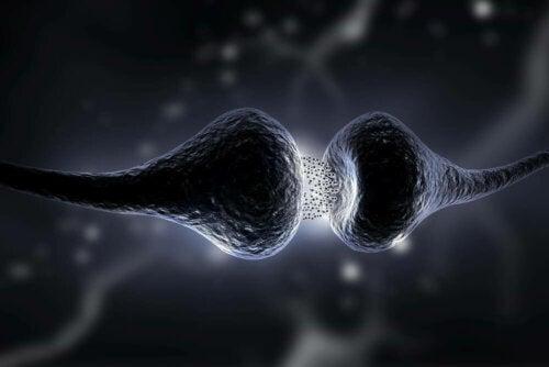 La synapse entre deux neurones