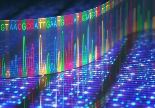 ADN et mutations génétiques
