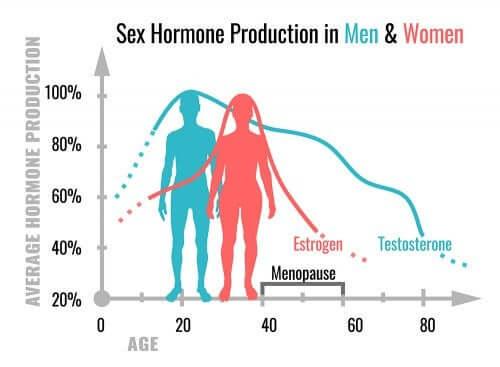 Quelles sont les fonctions des hormones sexuelles ?