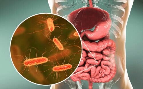 Des germes à l'intérieur d'un corps humain