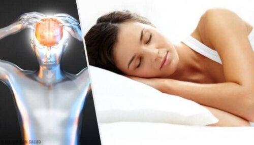 Les heures de sommeil sont essentielles pour le cerveau