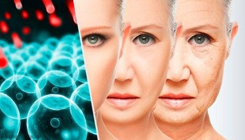 Les cellules et le fait de vieillir