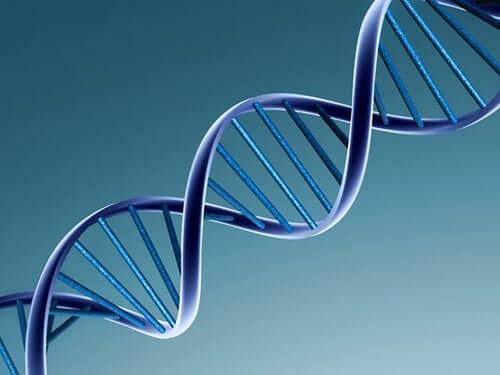 L'ADN d'un virus