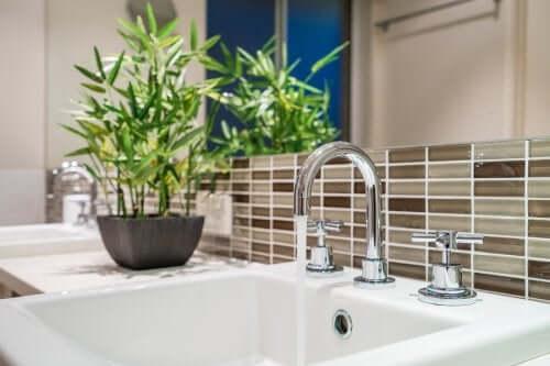 Un bambou dans une salle de bains