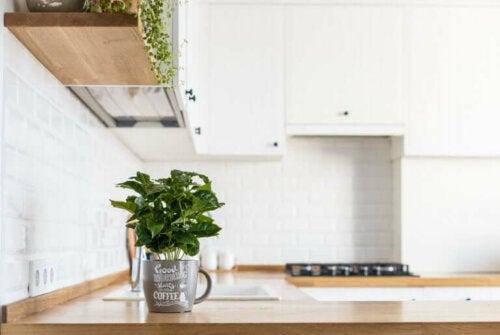 Comment avoir des plantes aromatiques fraîches dans votre cuisine