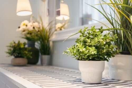 Des plantes aromatiques fraîches à la maison