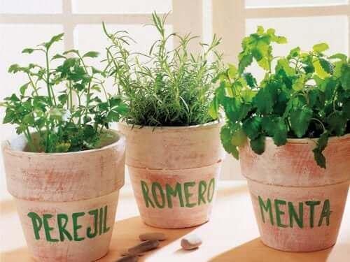 Des plantes aromatiques en pots