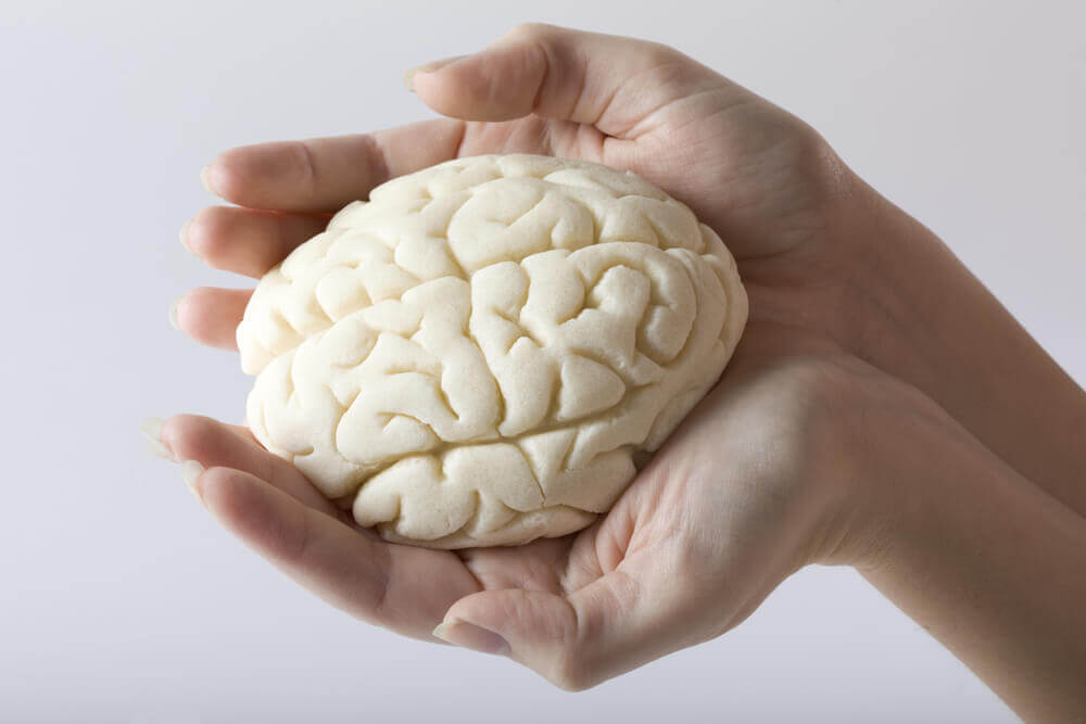 Le cerveau en miniature