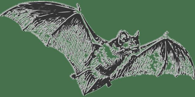 Chauves-souris : les responsables du coronavirus