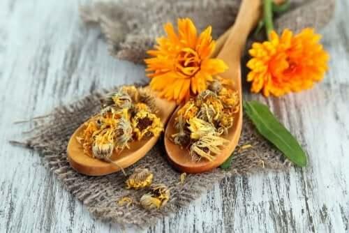 Pour faire disparaître les boutons de chaleur, les fleurs de calendula sont efficaces