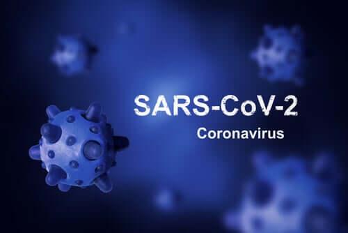Quelle est l'origine du coronavirus et pourquoi n'a-t-elle pas pu être éradiquée ?