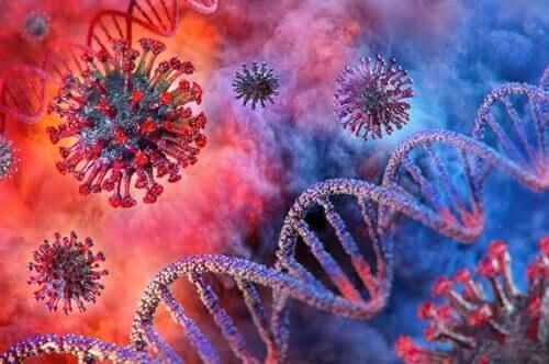 Le coronavirus et son impact sur les reins