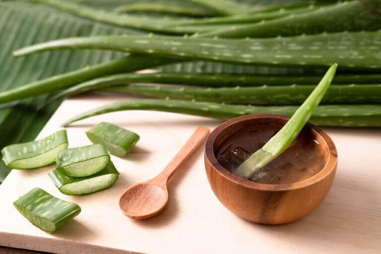 Les piqûres de guêpes peuvent être apaisées grâce à l'aloe vera
