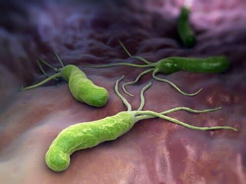 La réponse immunitaire face aux bactéries