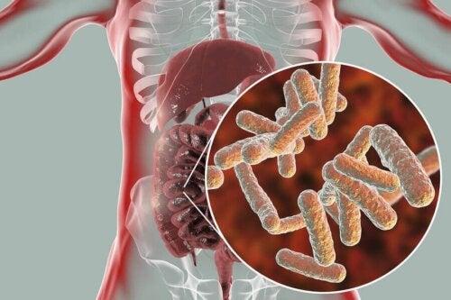 Les bactéries de la flore intestinale