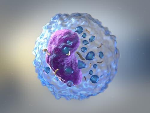 Les globules agissent lors de la réponse immunitaire