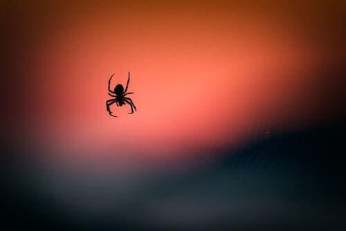 Le venin d'araignée aiderait à réduire les dommages cérébraux