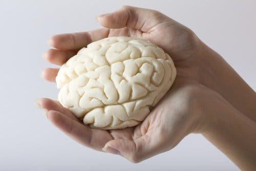 Les changements cérébraux qu'implique la grossesse
