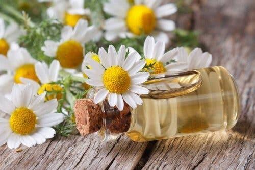 L'huile essentielle de camomille pour prévenir les crampes musculaires