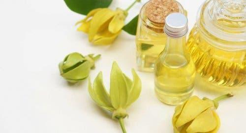 Contrôler l'anxiété avec des fleurs d'ylang-ylang
