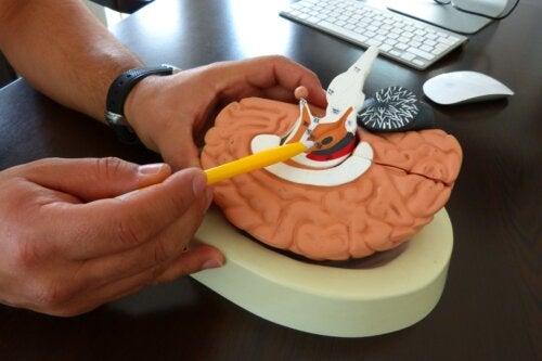 L'auriculothérapie et l'anatomie de l'oreille
