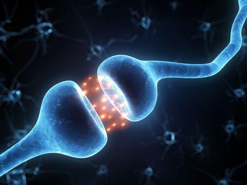Les neurones dans la maladie de Parkinson
