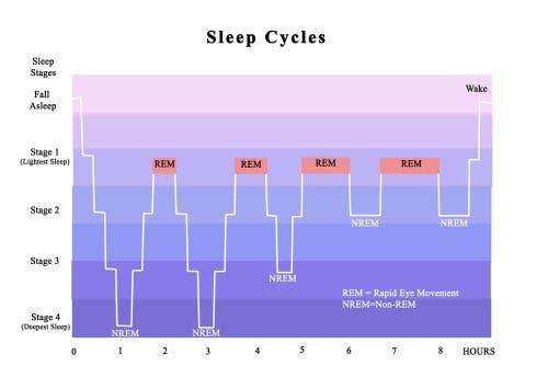 Les phases du sommeil et le trouble de l'insomnie