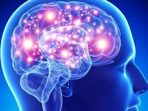 L'atrophie multi-systématisée dans le cerveau