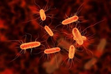 Des bactéries sur une image.
