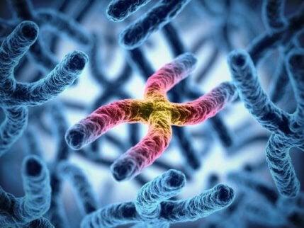 Les chromosomes X et le daltonisme