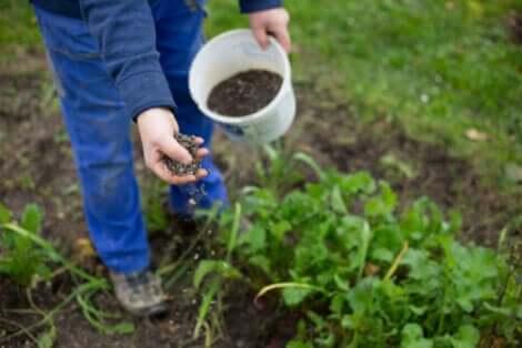 Une personne qui jardine.