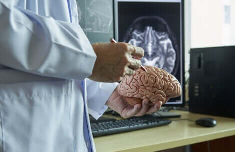Un médecin qui étudie le cerveau humain.