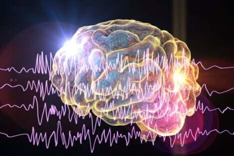 Le cerveau peut être soumis à différents types d'épilepsie.
