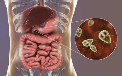 La giardiase : symptômes et traitement