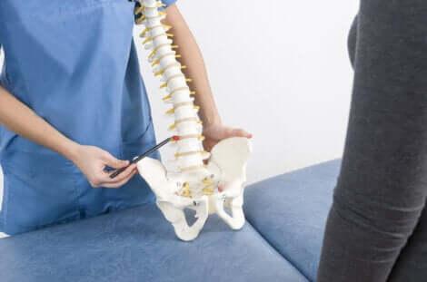 Un modèle de colonne vertébrale.