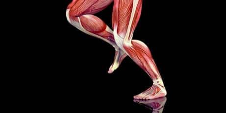 Les muscles des jambes et les points gâchette.