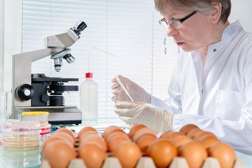 Pourquoi y-a-t-il une augmentation des cas de salmonellose pendant l'été?