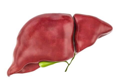 Les toxines se stockent dans le foie.