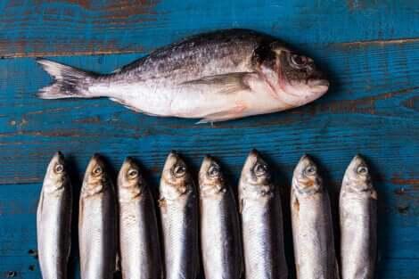 La consommation de poisson bleu permet de lutter contre le cholestérol.